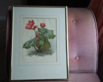 Vintage Print of Begonia 'Winter Gem' Red Flower.