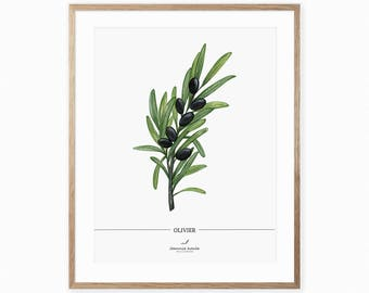 Art print with Olive branch, botanical print, illustration by Joannie Houle