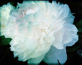 Peony Artwork, Modern Photgraphy, Botanical Art Prints, Flower Photography Prints, White Floral Art, White Peonies, Floral Decor
