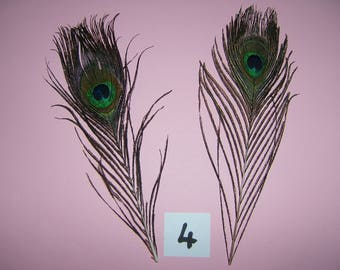 eyes of Peacock by 2 for jewelry or various decorations