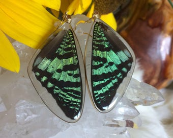 Real Sunset Moth Earrings, Ethical Butterfly Jewelry