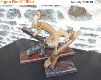SALE 15% OFF Set of 2 Lovely French vintage taxidermy (Mongoose)