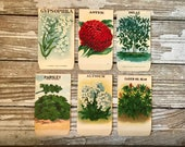Set/Lot of 6 Vintage Seed Packets, Modern Lithograph Co, Rochester  NY, Store Stock, Floral Prints, Flower Prints, Vintage Garden Prints