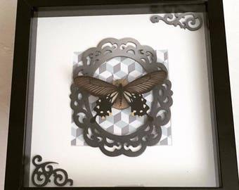 frame deco Entomology Butterfly ornament