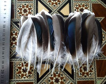 Feathers of peacock blue / grey/white 10-14cm 100pcs, natural
