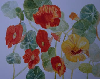 floral watercolor: nasturtiums varied and sunny