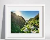 Calla Lily Canyon - nature print.nature photography.calla lillies.sunburst.landscape art.floral print.country home decor.flower art.