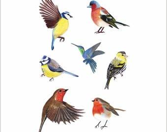 Seven Garden Birds artisan handdrawn watercolour wall decals/stickers/art transfers Ireland