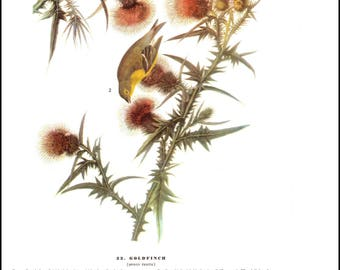 Goldfinch and Warbler by J J Audubon. The page is approx. 8.5 inches wide and 12 inches tall.