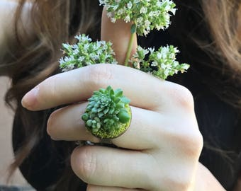 Real Succulent | Living Plant | Cactus Ring