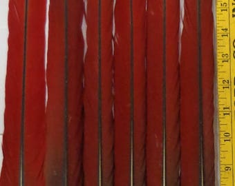 6 PERFECT BLUE & RED Macaw Parrot Tail Feathers 22 to 24 inches  #1F