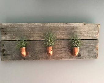 Copper and Wood Air Plant Wall Holder