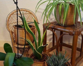 Rattan plant pot holders / planters