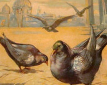 Nice Embossed Vintage Bird Postcard (Pidgons)