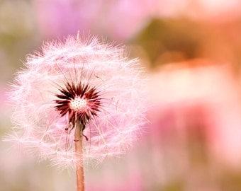 Colorful dandelion print, fine art dandelion photography, dandelion art, surreal dandelion photo, dandelion wall art, dandelion photo