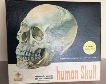 Vintage Renwal Glow in the Dark Human Skull Model Kit