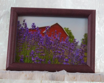 Lavender Field and Barn photo
