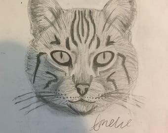 Tabby Cat Pencil Drawing