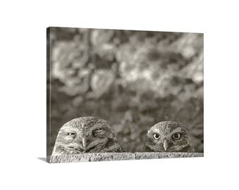 Burrowing Owl, Owl Print, Bird Art, Bird Photography, Canvas Photograph, Wildlife Art, Sepia, Desert Birds, Tucson, Arizona, MurrayBolesta