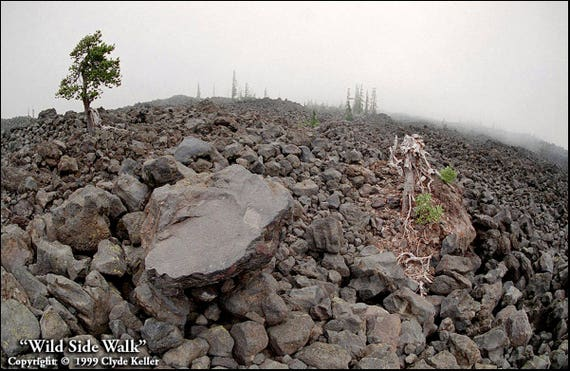 Belknap Crater, Oregon, WILD SIDE WALK, Clyde Keller photo, 1999