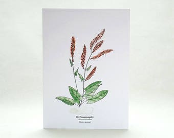 Plant Card | Garden Sorrel | Useful Plants | Wild Herbs | Gardener Gift | Botanical Card | Plant Identification | Plant Lover | Garden Herbs