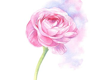 Ranunculus print of watercolour painting, Flower print, ranunculus watercolor painting print, wedding flowers print, A4 size, R22717