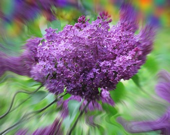 """Digital Download from Original Photograph """"Mystical Lilac"""" by Jim Duff 2017 High Resolution 8 1/2"""" X 11"""""""
