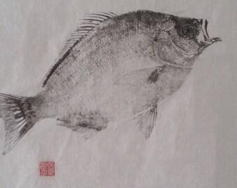 SURF PERCH Original Gyotaku - traditional Japanese fish art