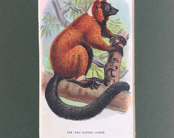 Red Ruffed Lemur bookplate, Lloyds Natural History, Primates Apes artwork, Antique Lithograph