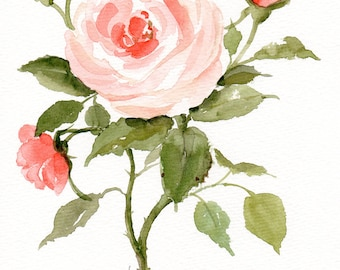 Original watercolor painting, Art Floral Pink roses blooming Rose painting Rosa Rose flower Blush pink Rose watercolour Garden bouquet