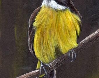 SALE Bird Art Painting Lesser Kiskadee SFA Wildlife Original hand painted bird acrylic painting by Australian Artist Janet M Graham