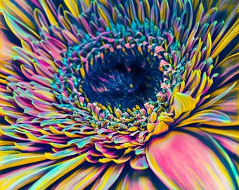 Colorful Gerbera Daisy Print, Flower Print, Daisy Photo, Daisy Picture, Flower Print, Yellow Daisy Print, Nursery Art, Flower Photo, Daisy