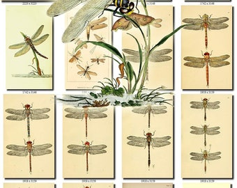 DRAGONFLIES-1 Collection of 200 vintage images Damselflies Dragonfly Damselfly pictures animals High resolution digital download printable