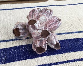 Beautiful Seashell Barnacle with Purple, Lavender and White, Statement Found Object, Seashore Decor