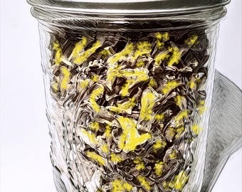 Mixology Alcohol Infusion - Dehydrated / Dried Lemon Zest / Peel