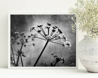 Gray wall art, Queen Anne's Lace print, Botanical digital art, Black white photography, Printable art Digital download Living room decor 5x7