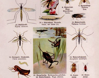 1920s INSECTS Print, Vintage Antique Book Plate prints, beetles ants flies plate 18, insect art illustrations