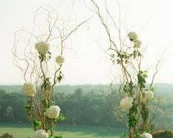 Branches for DIY Curly Willow Wedding Arch