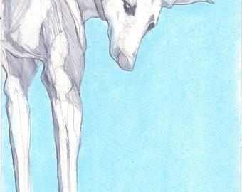 Original drawing. A pencil and pastel sketch of a greyhound, sighthound, original art, blue, expressive art, wall art, dog drawing