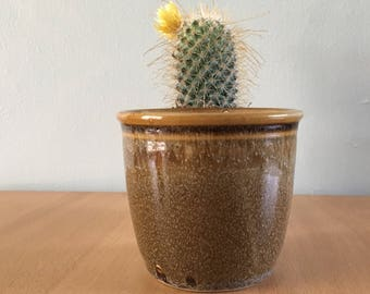 Darling vintage studio ceramic plant pot / planter in natural speckled earth tone glaze of olive green for a succulent or tropical plant!