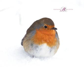 Robin greeting cards/Set of 5 Christmas greeting cards/Blank greeting cards/Robin Christmas cards/Bird photography/British wildlife