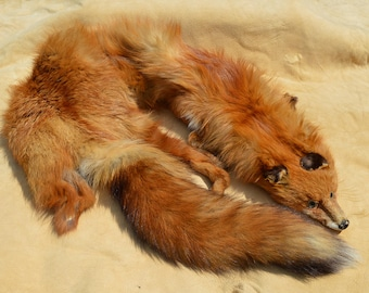 Vintage Red Fox Pelt With Gorgeous Tail - Antique Stole