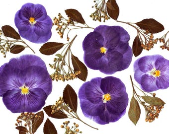 Pressed Violas pansies ( 14 pcs ).Pressed flowers. Real flowers.Herbarium.Lilac. Purple. For Oshibana, Cards, Scrapbooking, Decor