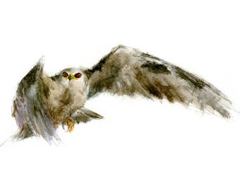 Black-shouldered Kite watercolor painting - bird watercolor painting - 5x7 inch print - 0144