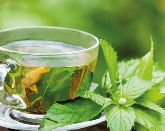 Herb For Tea Growing Kit