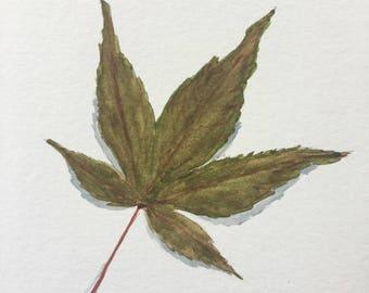 Original Watercolor Painting Japanese Maple Leaf