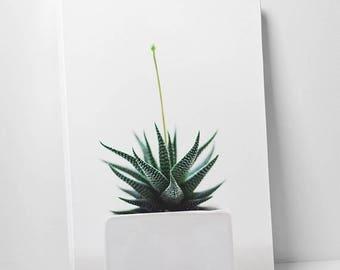 Summer SALE Botanical succulent canvas print home decor art