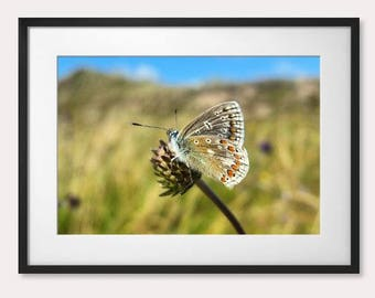 The Butterfly Effect, part II - Strandhill, Co. Sligo, Ireland
