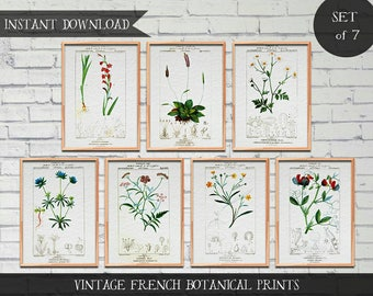 Vintage French Botanical Illustrations, Set of 7 prints, Instant download Digital prints, Vintage illustrations, botanical illustrations