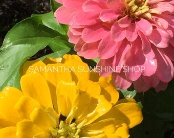 Original Photography Fine Art Photography Yellow Pink Zinnias Nature Photo Floral Photo Wall Decor Flowers Landscape Photo Gift for Her